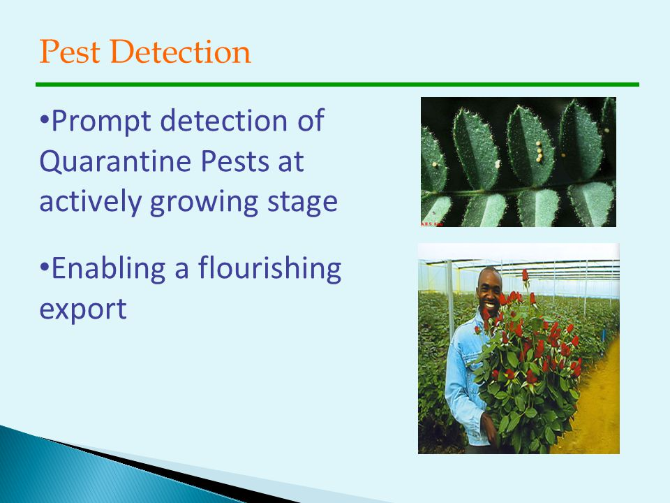 Pest Detection Prompt detection of Quarantine Pests at actively growing stage.