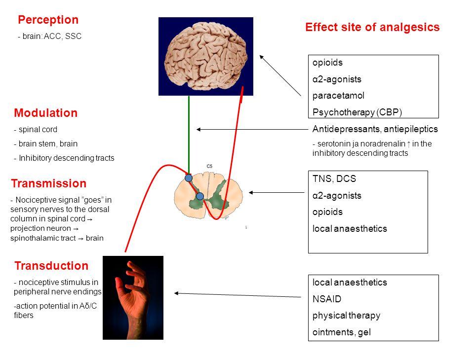Effect site of analgesics