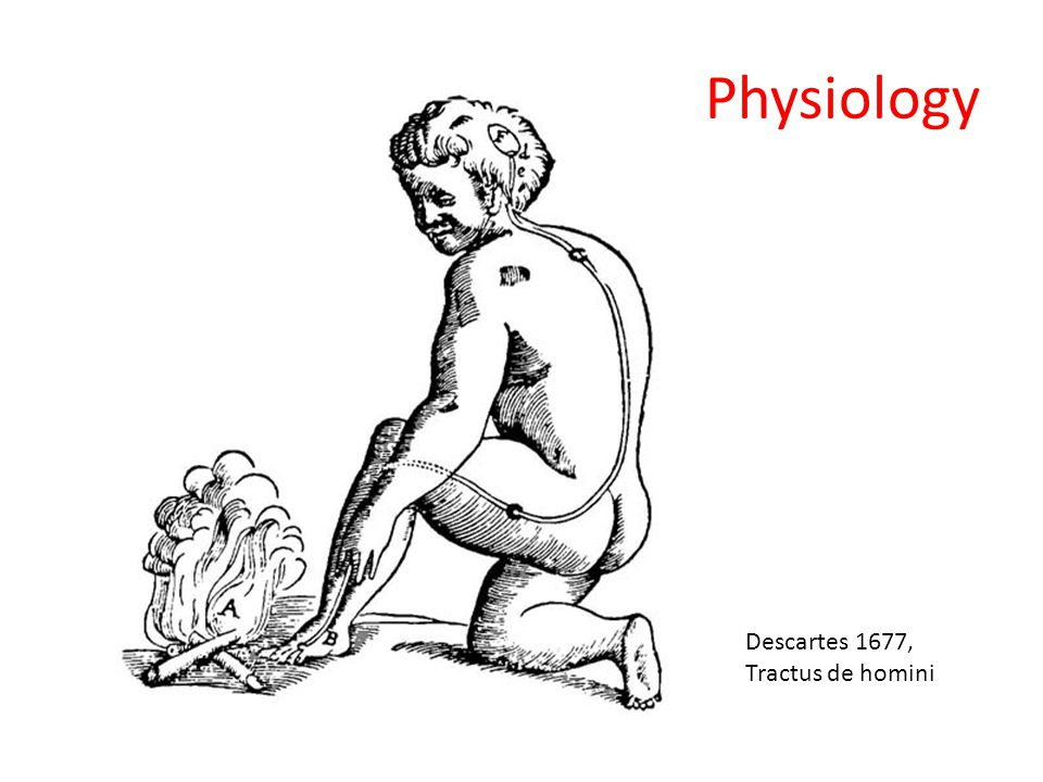 Physiology Descartes 1677, Tractus de homini