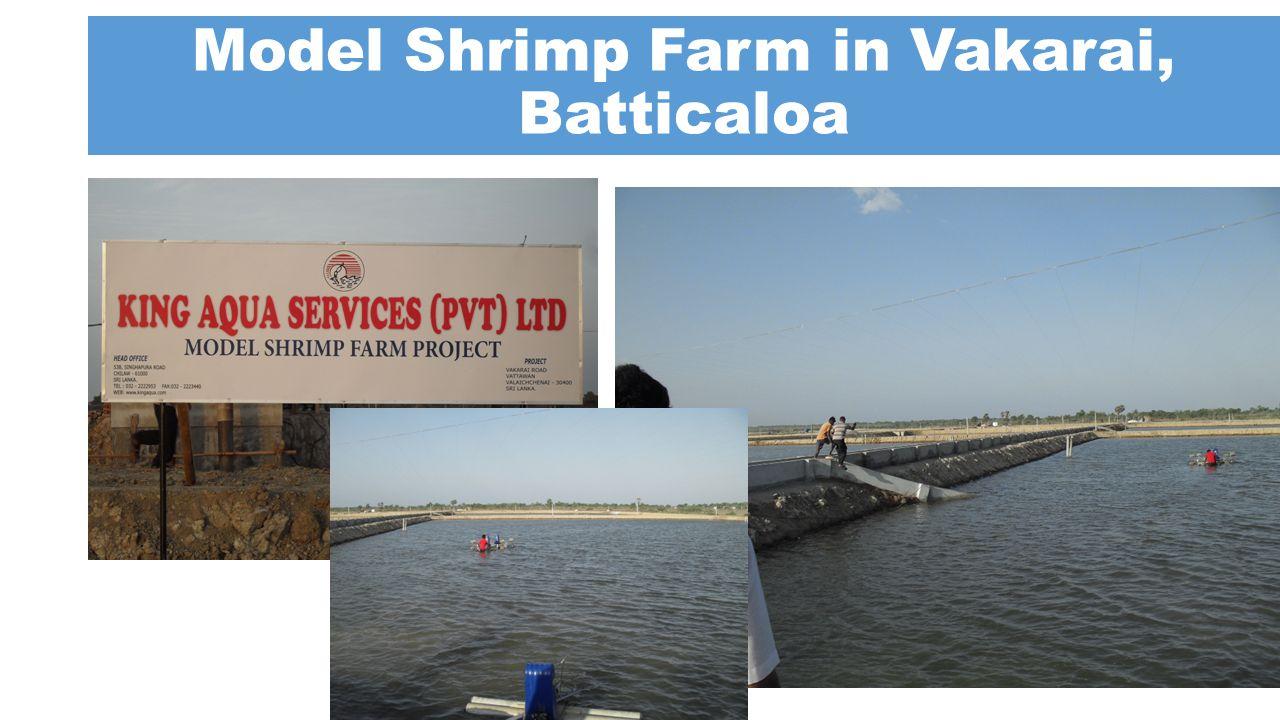 Model Shrimp Farm in Vakarai, Batticaloa