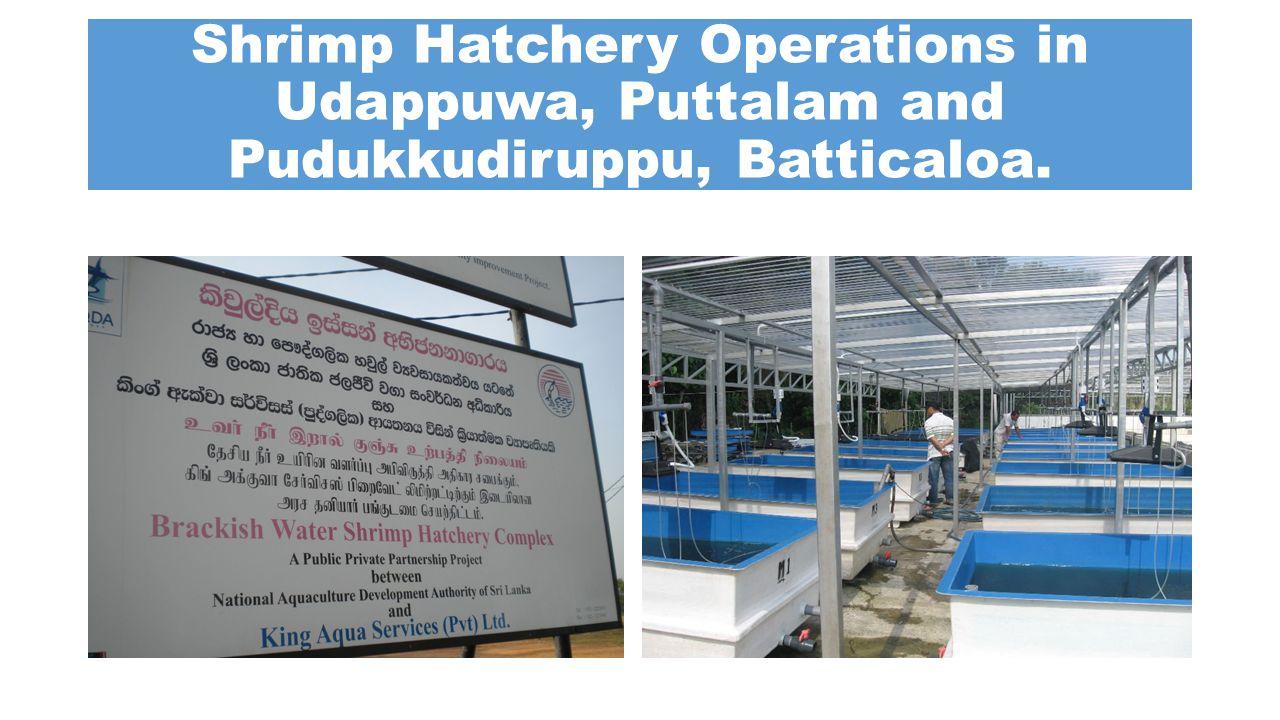 Shrimp Hatchery Operations in Udappuwa, Puttalam and Pudukkudiruppu, Batticaloa.