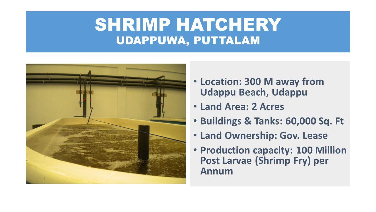SHRIMP HATCHERY UDAPPUWA, PUTTALAM
