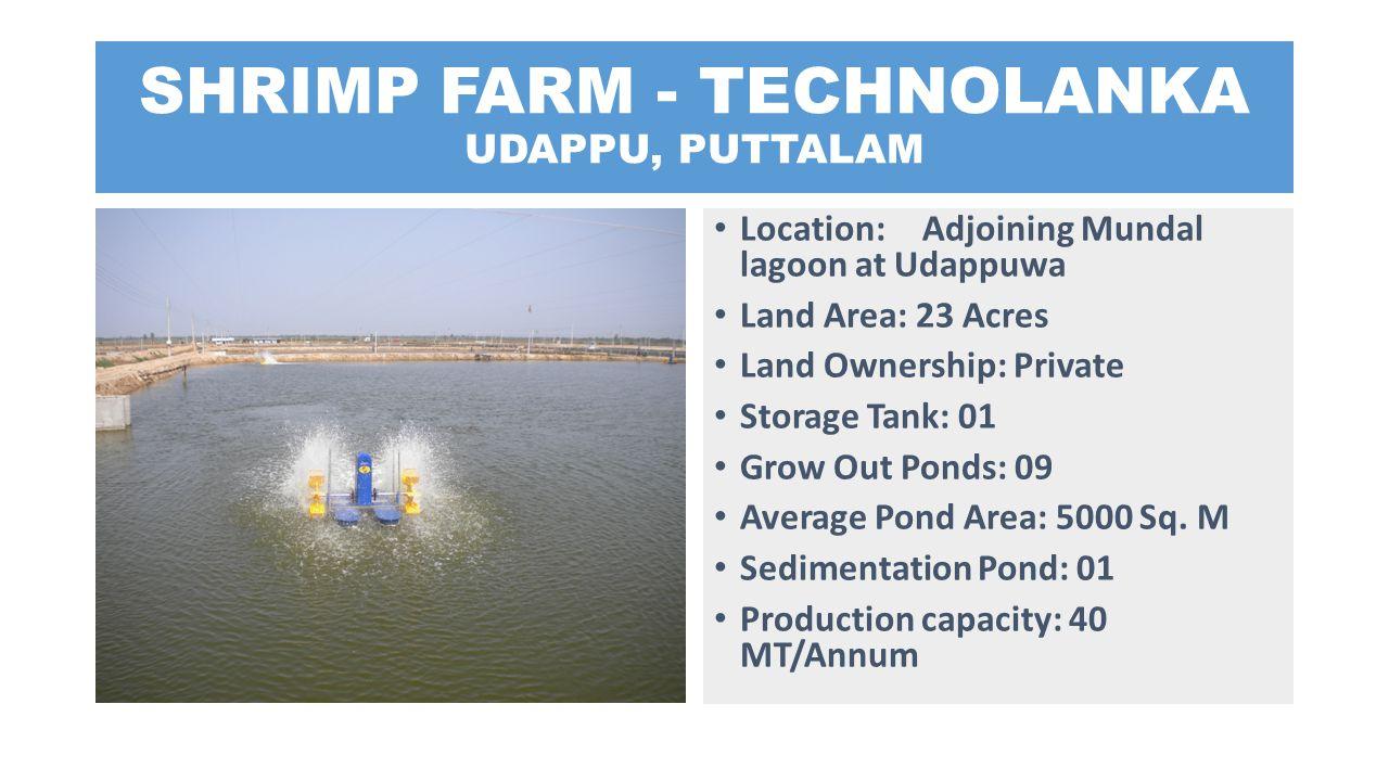 SHRIMP FARM - TECHNOLANKA UDAPPU, PUTTALAM