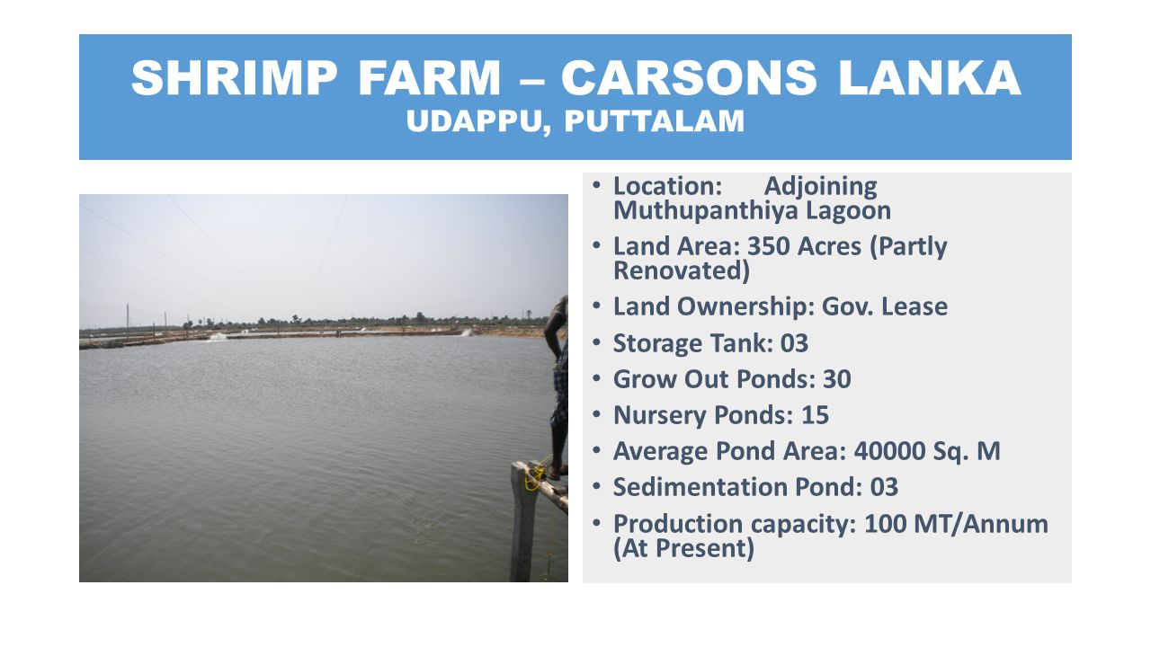 SHRIMP FARM – CARSONS LANKA UDAPPU, PUTTALAM