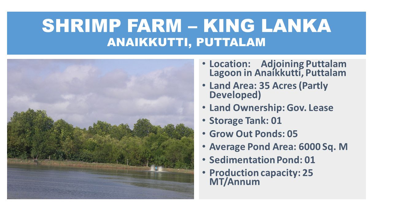 SHRIMP FARM – KING LANKA ANAIKKUTTI, PUTTALAM
