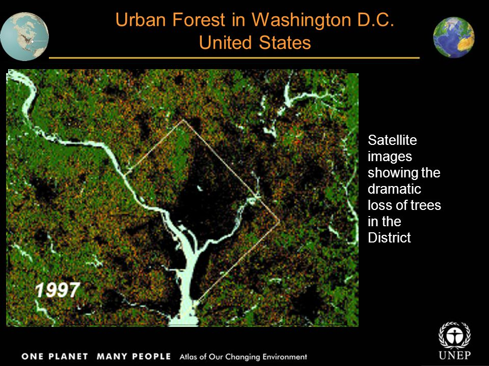 Urban Forest in Washington D.C. United States
