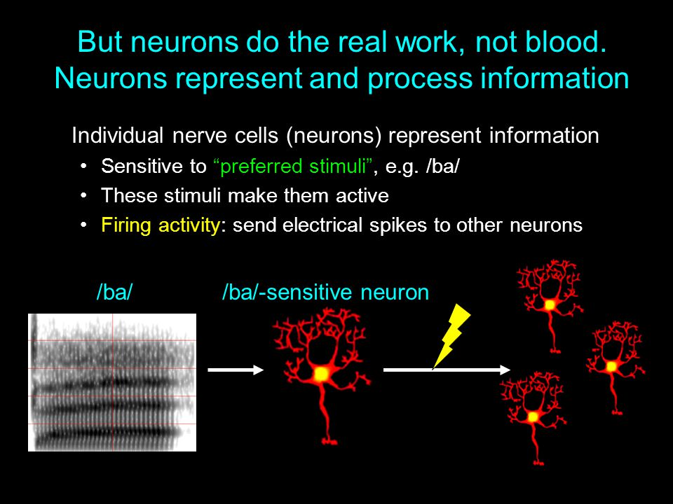 But neurons do the real work, not blood
