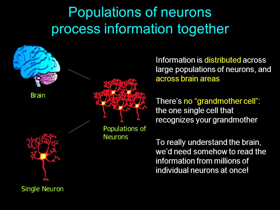 Populations of neurons process information together