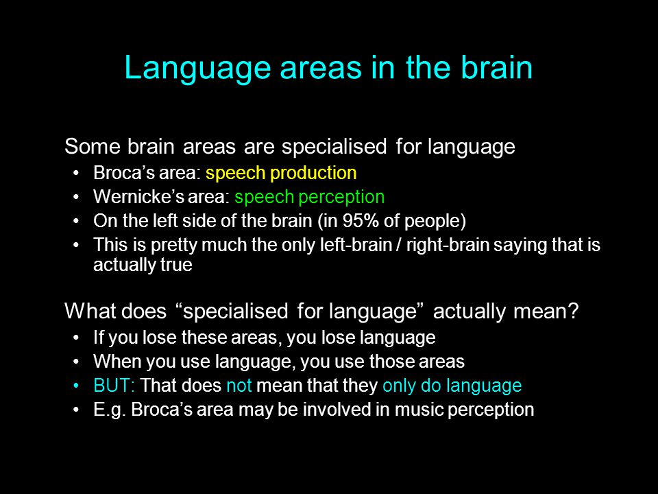 Language areas in the brain