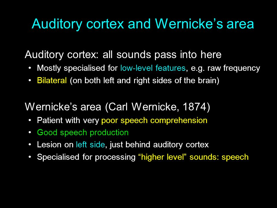 Auditory cortex and Wernicke's area