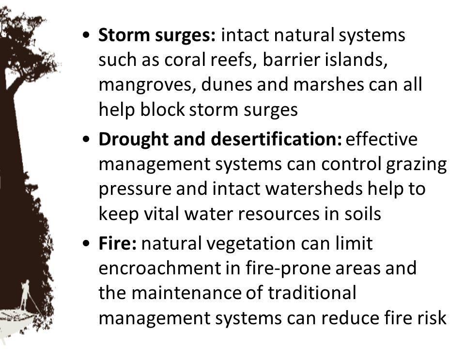 Storm surges: intact natural systems such as coral reefs, barrier islands, mangroves, dunes and marshes can all help block storm surges