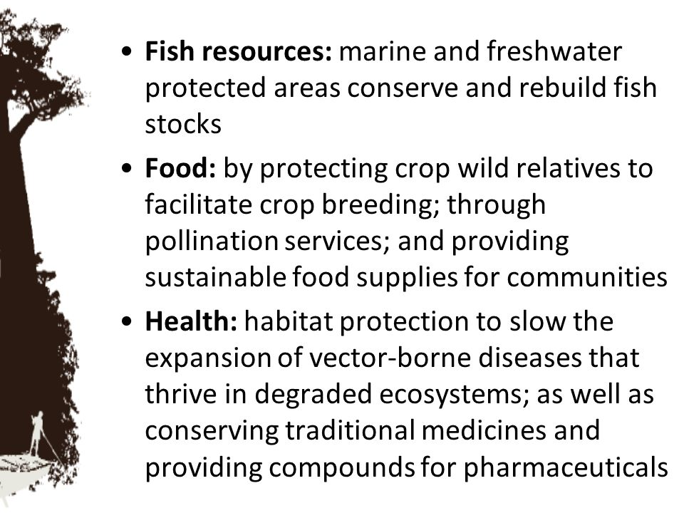 Fish resources: marine and freshwater protected areas conserve and rebuild fish stocks