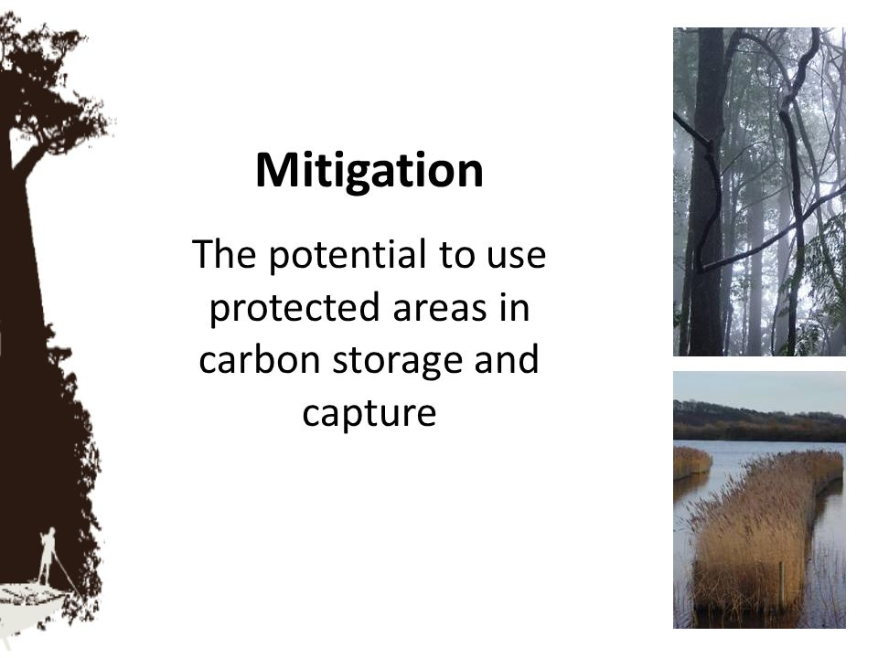 The potential to use protected areas in carbon storage and capture