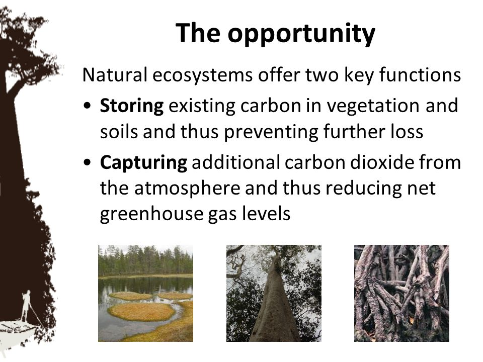 The opportunity Natural ecosystems offer two key functions