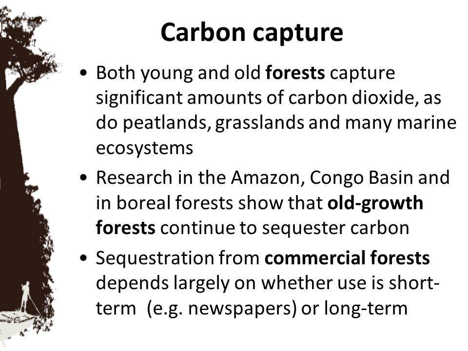 Carbon capture Both young and old forests capture significant amounts of carbon dioxide, as do peatlands, grasslands and many marine ecosystems.