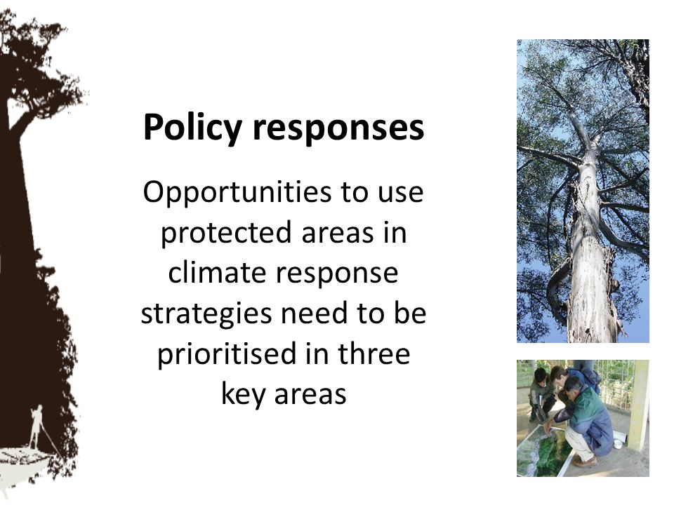 Policy responses Opportunities to use protected areas in climate response strategies need to be prioritised in three key areas.