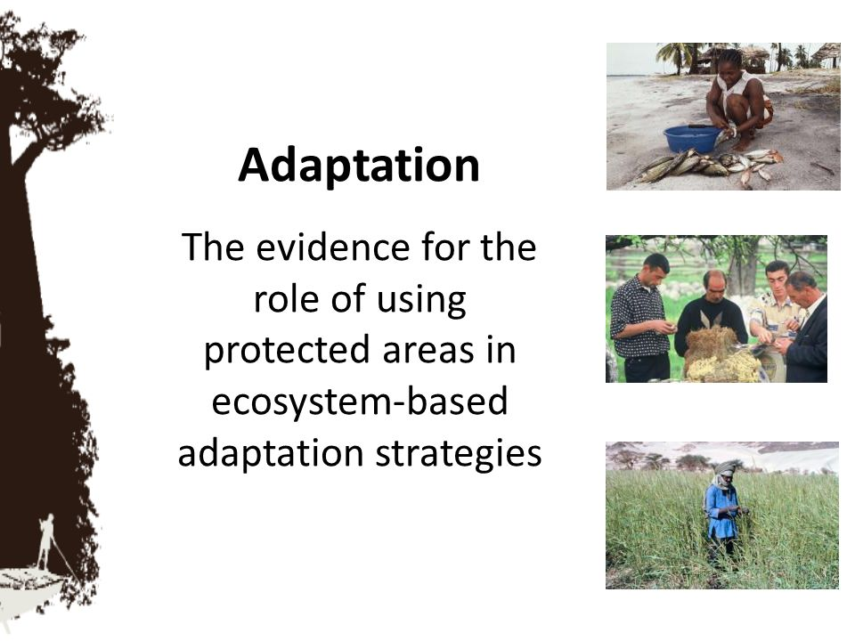 Adaptation The evidence for the role of using protected areas in ecosystem-based adaptation strategies.