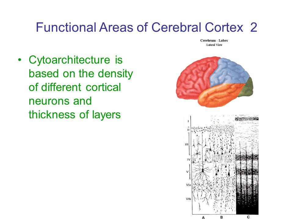 Functional Areas of Cerebral Cortex 2