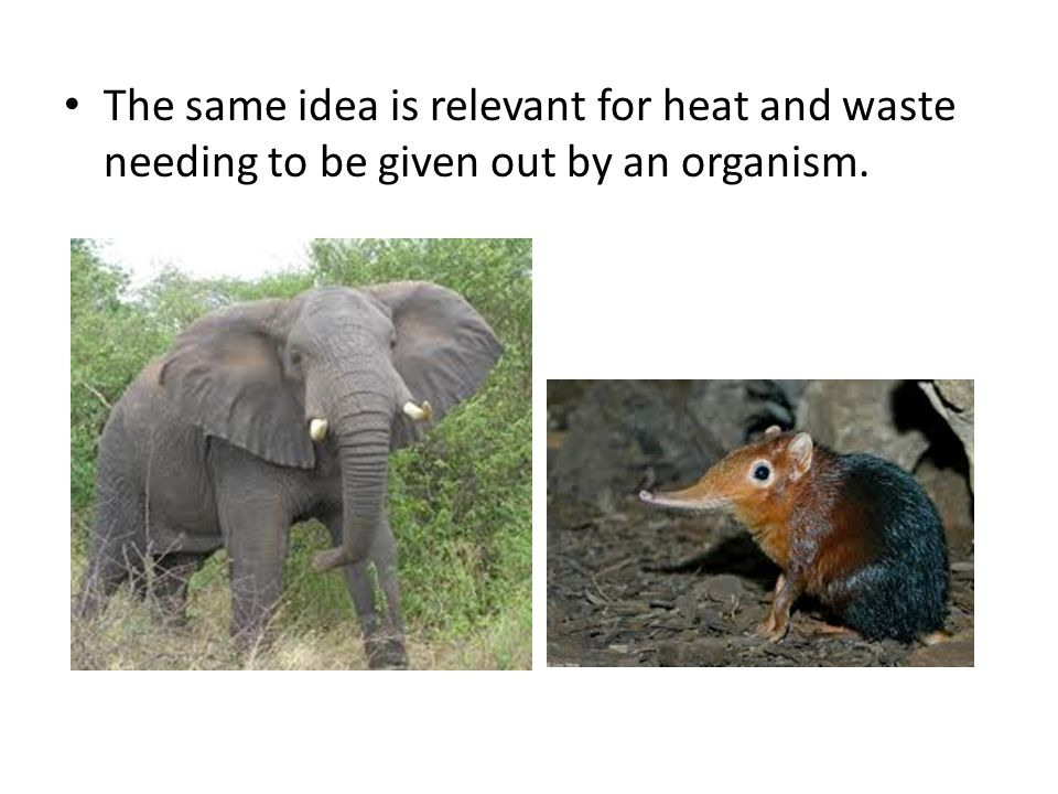 The same idea is relevant for heat and waste needing to be given out by an organism.