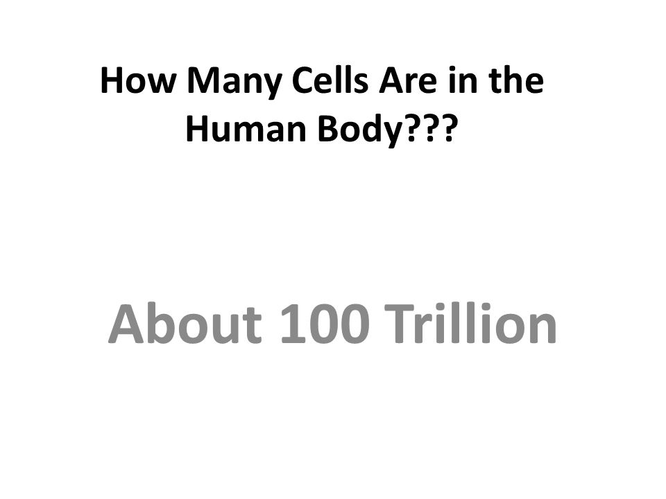 How Many Cells Are in the Human Body