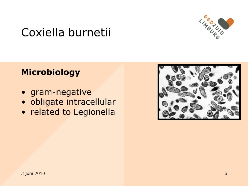 Coxiella burnetii Microbiology gram-negative obligate intracellular