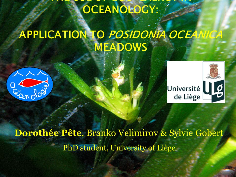 THE USE OF ECO-EXERGY IN OCEANOLOGY: APPLICATION TO POSIDONIA OCEANICA MEADOWS