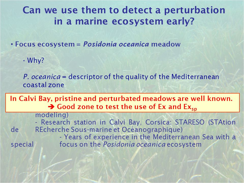 Can we use them to detect a perturbation in a marine ecosystem early