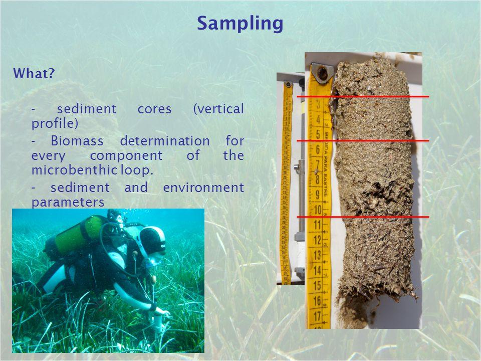 Sampling What - sediment cores (vertical profile)