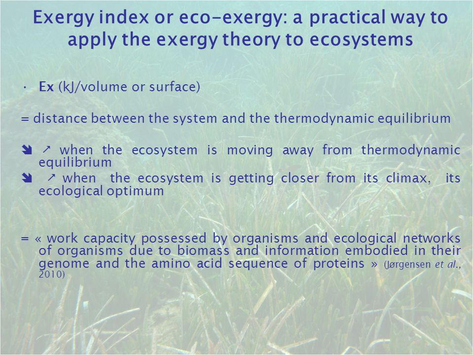 Exergy index or eco-exergy: a practical way to apply the exergy theory to ecosystems