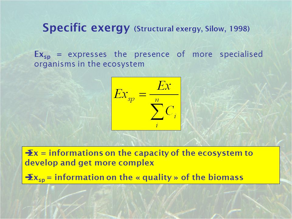 Specific exergy (Structural exergy, Silow, 1998)