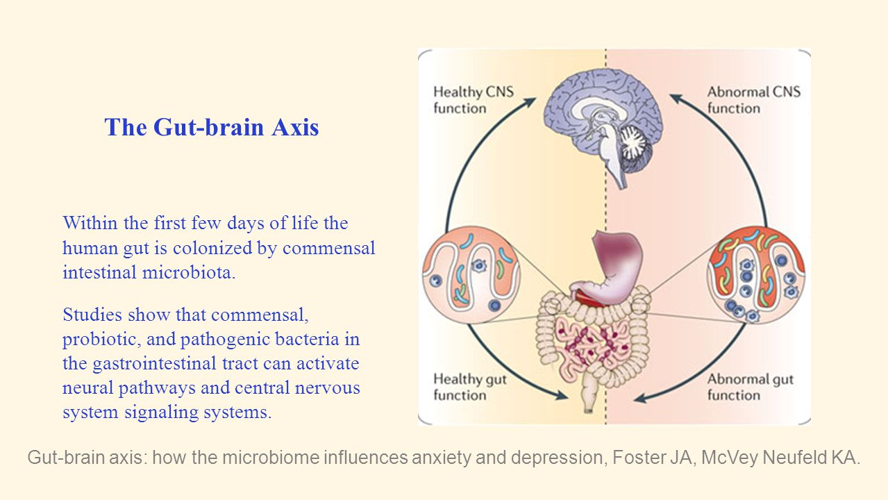 The Gut-brain Axis Within the first few days of life the human gut is colonized by commensal intestinal microbiota.
