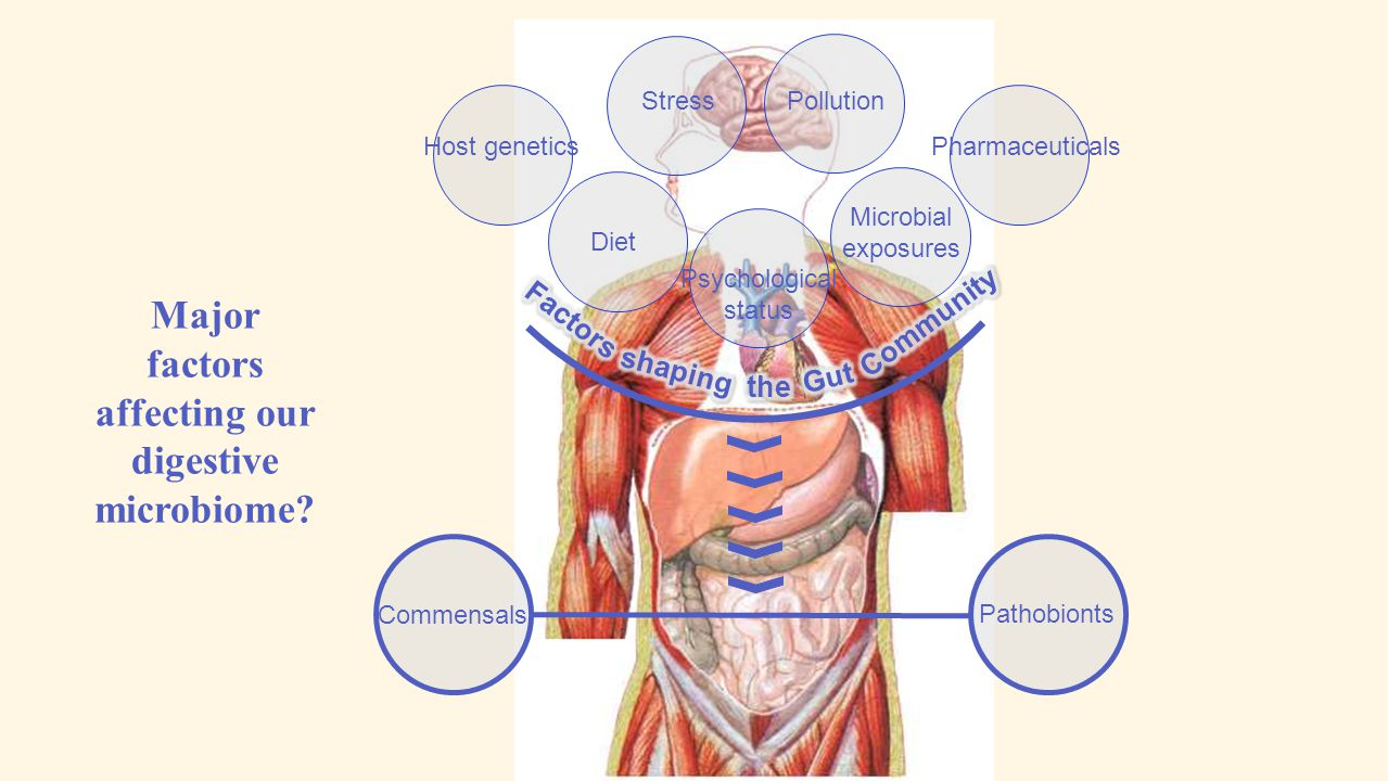 Major factors affecting our digestive microbiome