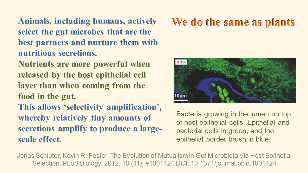 Animals, including humans, actively select the gut microbes that are the best partners and nurture them with nutritious secretions.