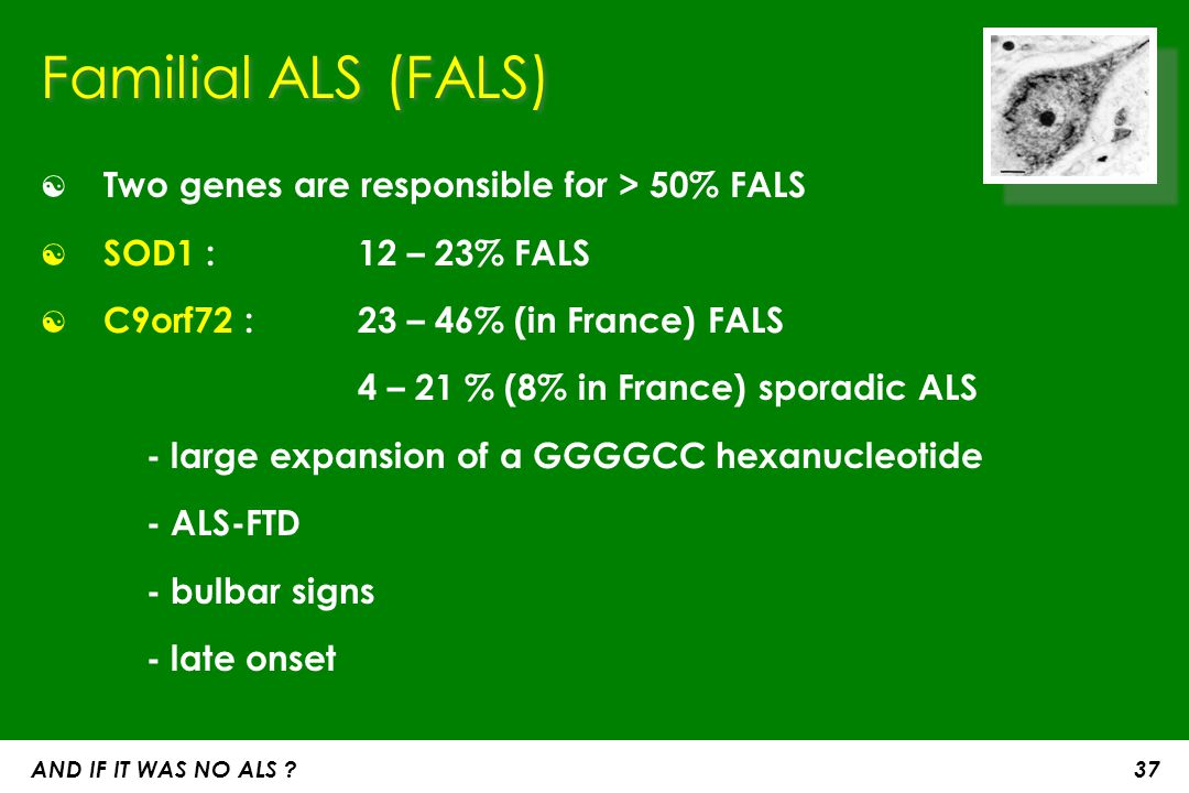Familial ALS (FALS) Two genes are responsible for > 50% FALS