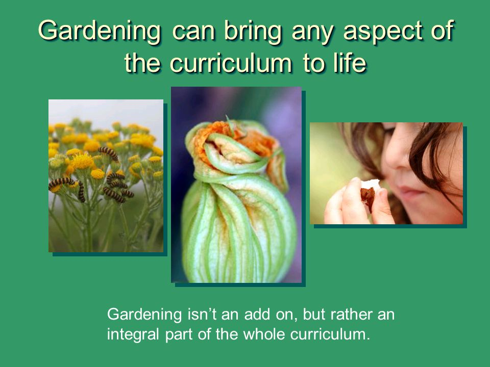 Gardening can bring any aspect of the curriculum to life