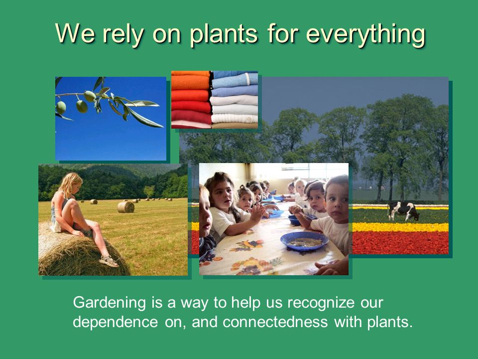 We rely on plants for everything