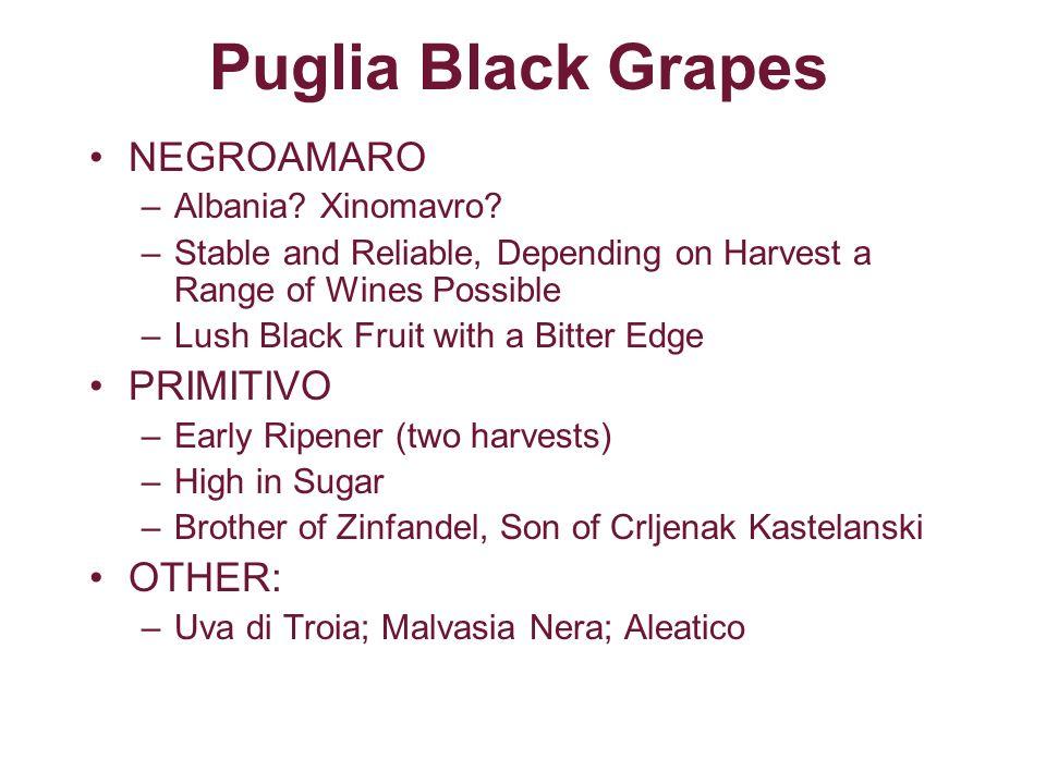 Puglia Black Grapes NEGROAMARO PRIMITIVO OTHER: Albania Xinomavro