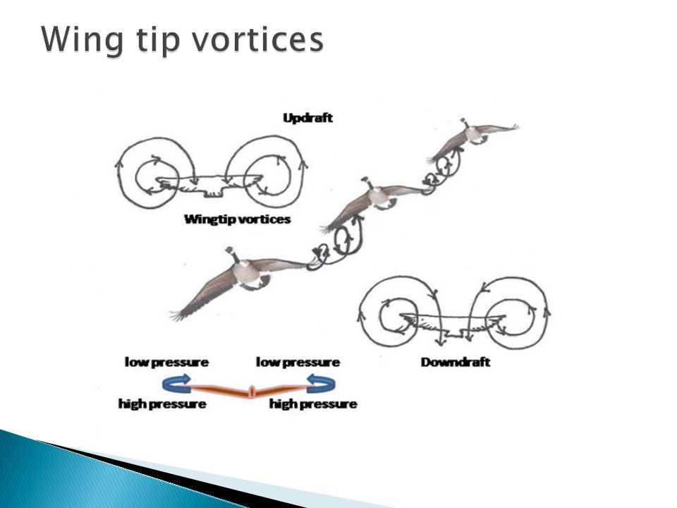 Wing tip vortices
