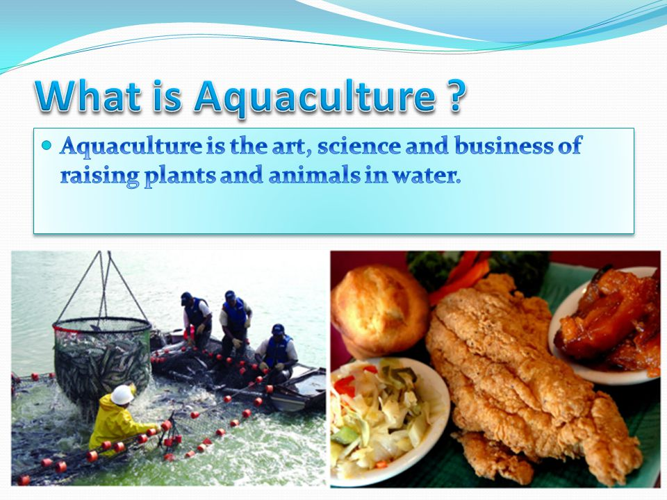 What is Aquaculture .