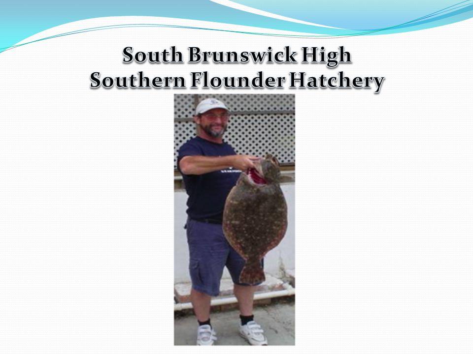 Southern Flounder Hatchery