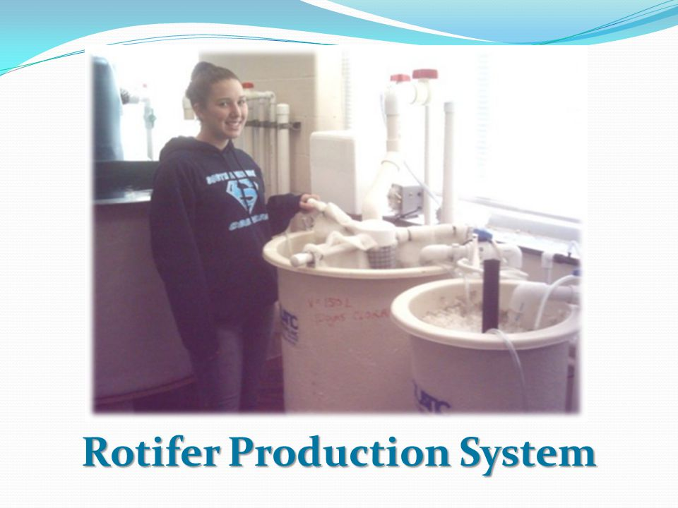 Rotifer Production System