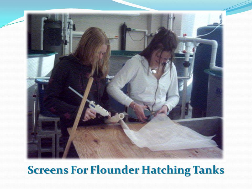 Screens For Flounder Hatching Tanks