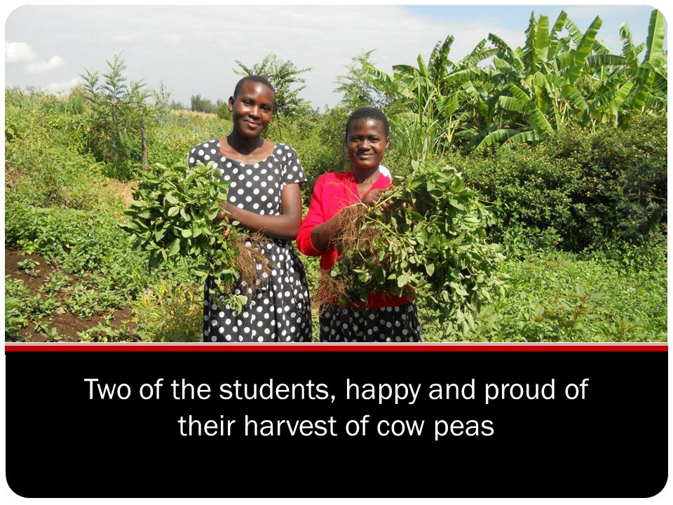 Two of the students, happy and proud of their harvest of cow peas