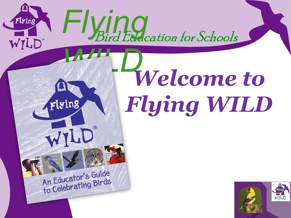 Flying WILD Bird Education for Schools Welcome to Flying WILD