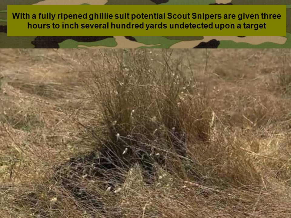 With a fully ripened ghillie suit potential Scout Snipers are given three hours to inch several hundred yards undetected upon a target