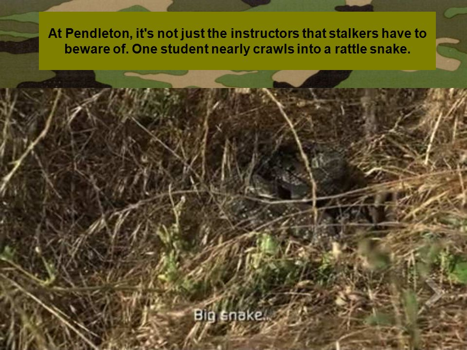At Pendleton, it s not just the instructors that stalkers have to beware of.