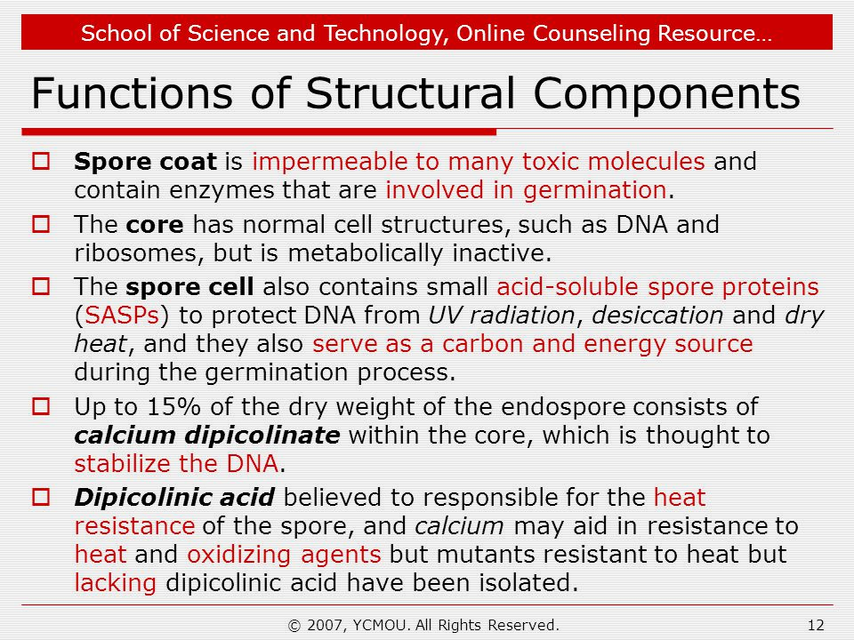 Functions of Structural Components
