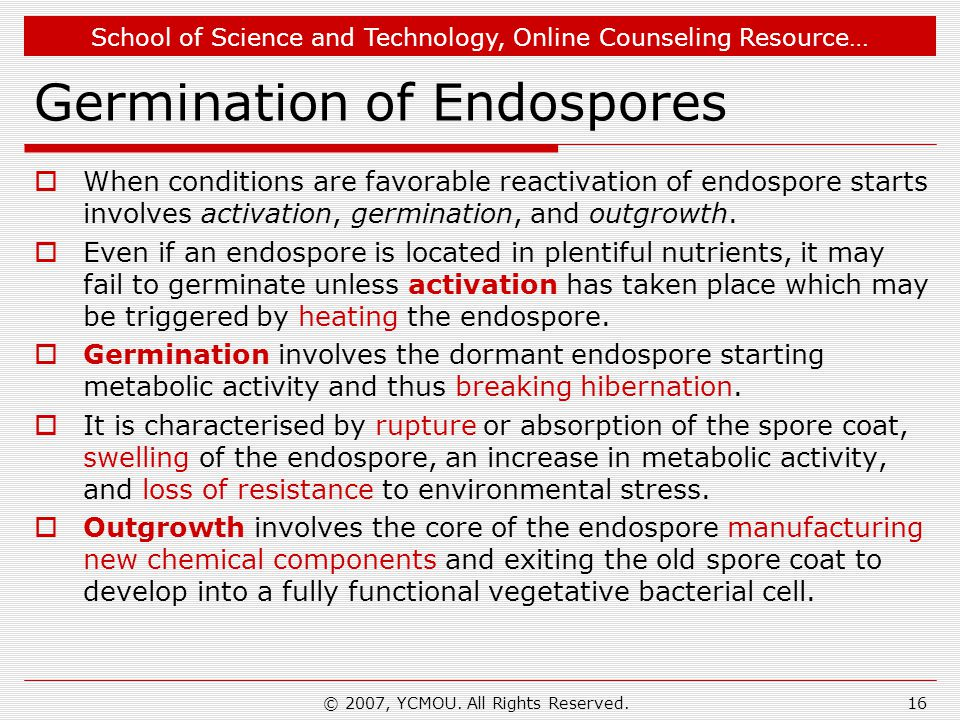 Germination of Endospores