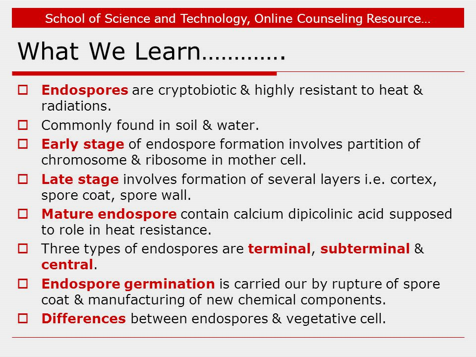 What We Learn…………. Endospores are cryptobiotic & highly resistant to heat & radiations. Commonly found in soil & water.
