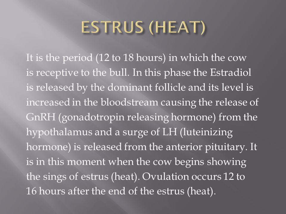 ESTRUS (HEAT)